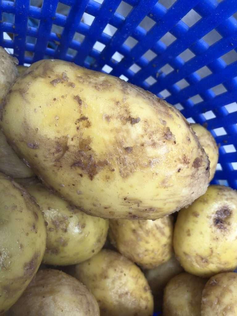 Jaycraft Potato Brush Peeler